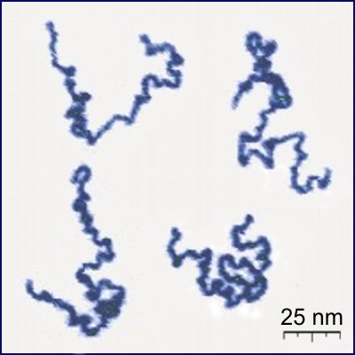 Polymerní řetězec poly(vinylpyridine) Appearance of real linear polymer chains as recorded under liquid medium roztoč using an atomic force microscope. Chain thickness is 0.4 nm.