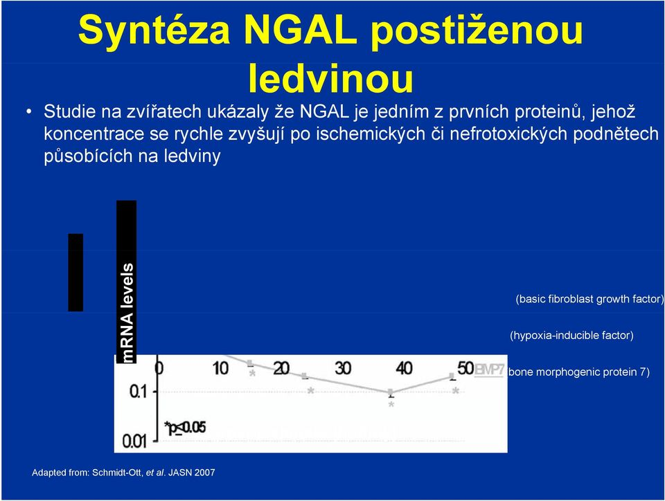 působících na ledviny mrna levels (basic fibroblast growth factor) (hypoxia-inducible