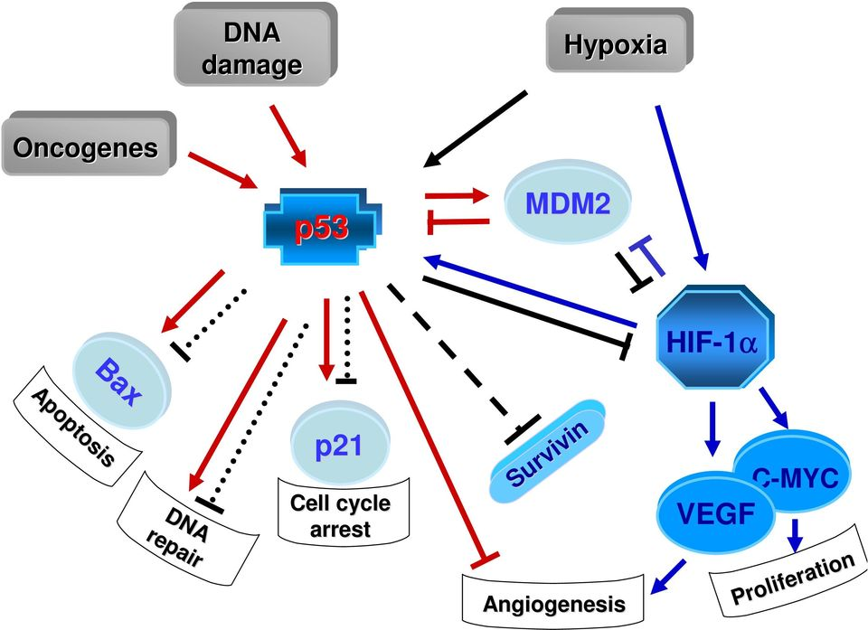 C-MYC Proliferation Proliferation Angiogenesis