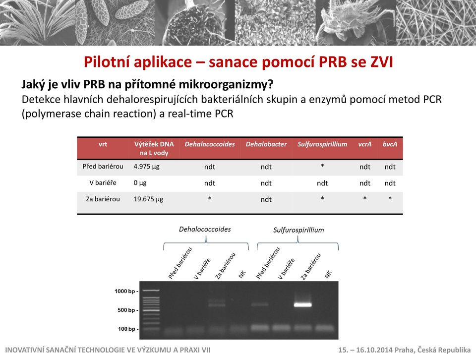 reaction) a real-time PCR vrt Výtěžek DNA na L vody Dehalococcoides Dehalobacter Sulfurospirillium