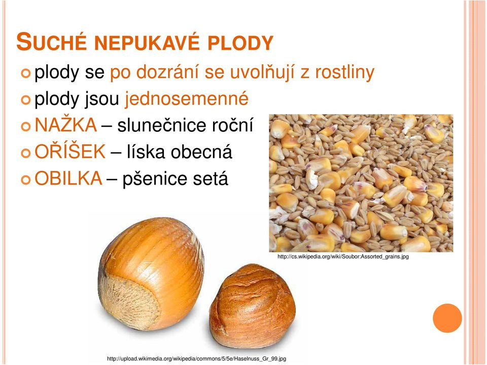 pšenice setá http://cs.wikipedia.org/wiki/soubor:assorted_grains.