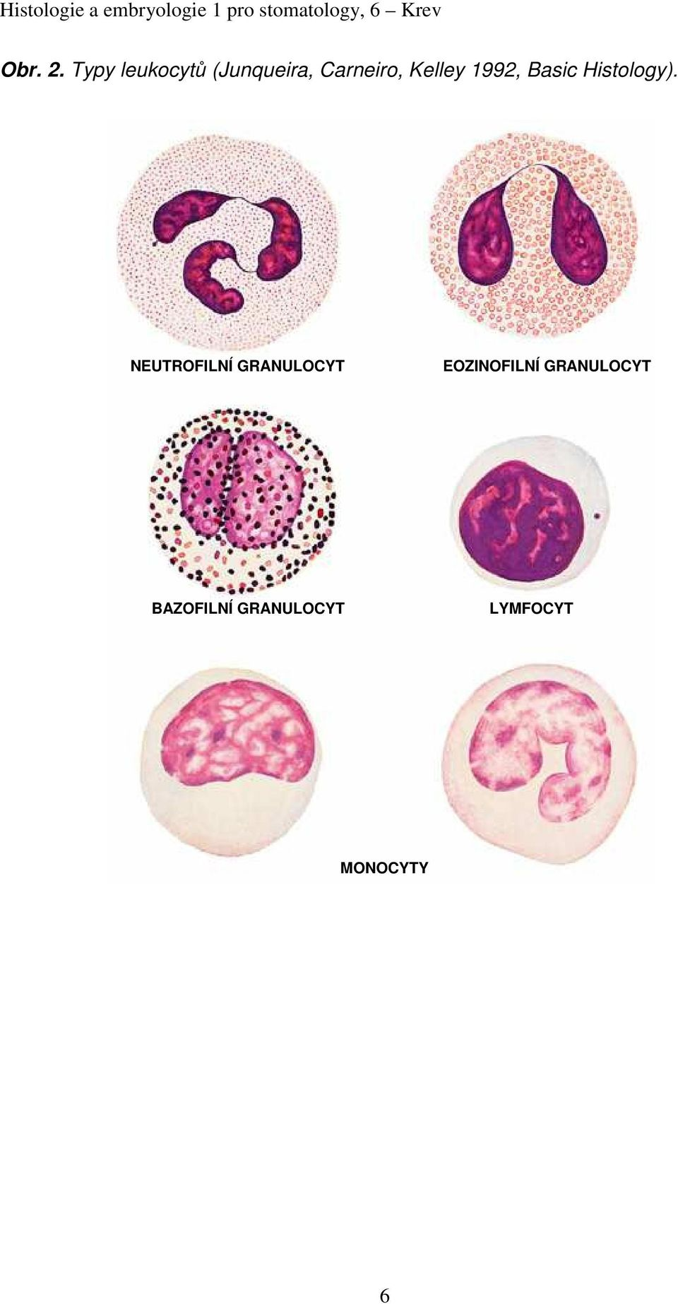Kelley 1992, Basic Histology).
