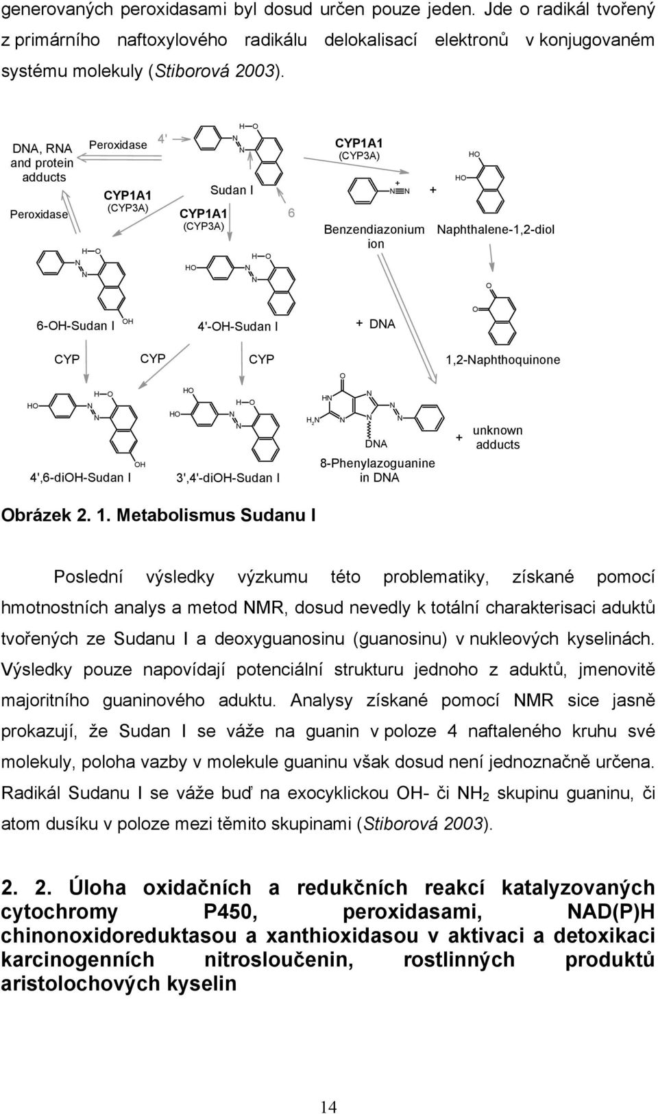 4'-H-Sudan I + DNA CYP CYP CYP H H N N H H H N N H 4',6-diH-Sudan I 3',4'-diH-Sudan I H 2 N HN N N N N N DNA 8-Phenylazoguanine in DNA 1,