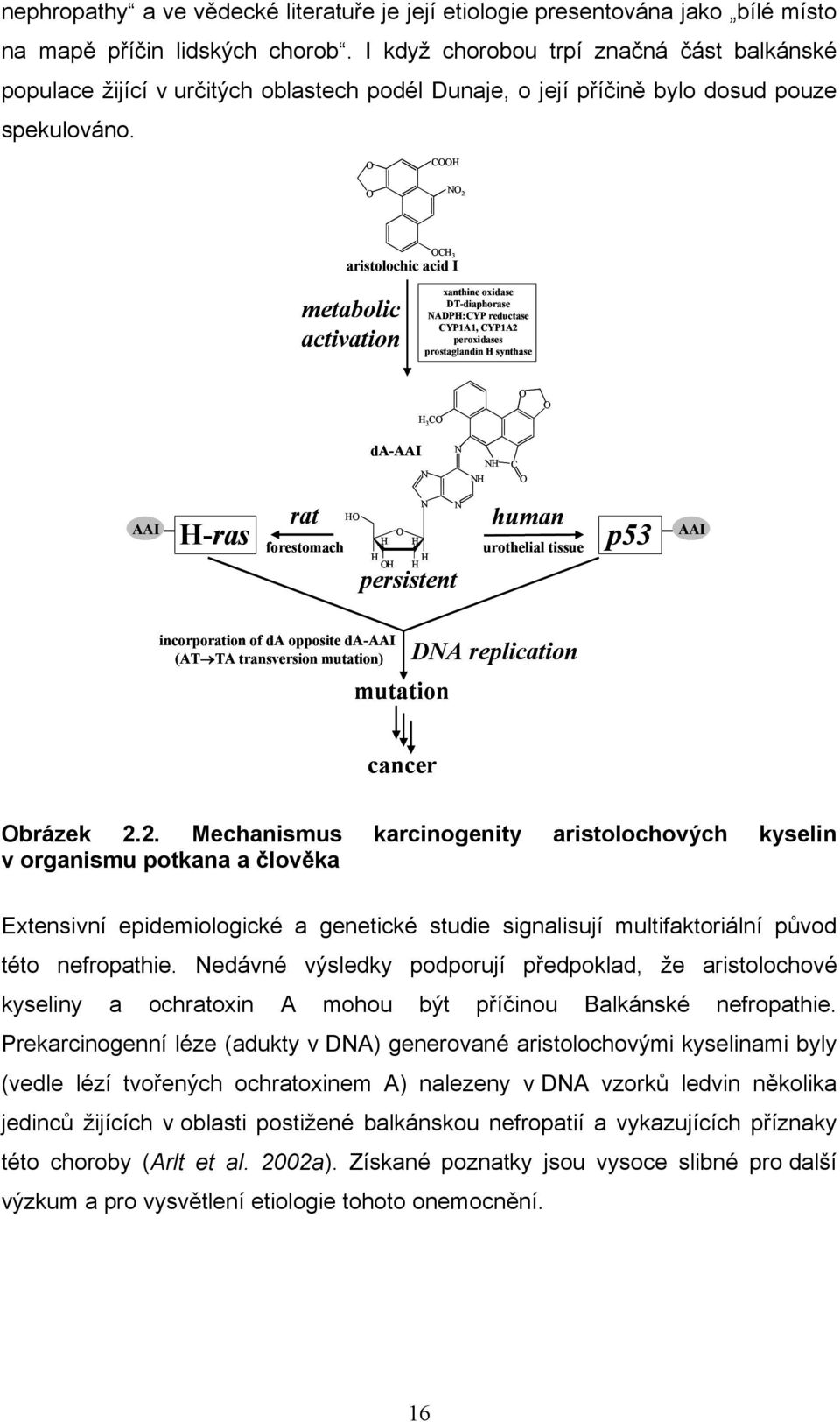 CH N 2 CH 3 aristolochic acid I metabolic activation xanthine oxidase DT-diaphorase NADPH:CYP reductase CYP1A1, CYP1A2 peroxidases prostaglandin H synthase H 3 C da-aai N N NH NH C AAI H-ras rat
