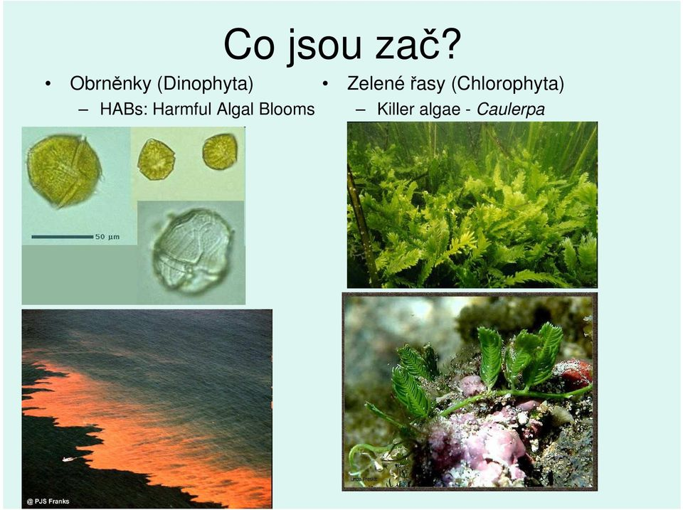 Harmful Algal Blooms Zelené