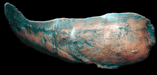 view Does foreign