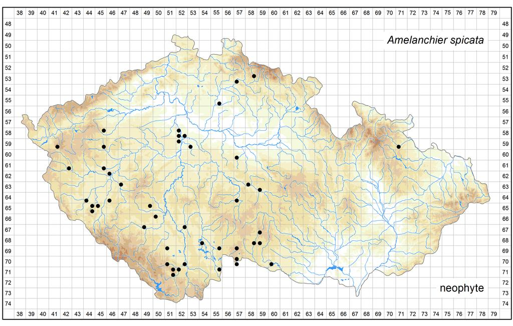 Distribution of Amelanchier spicata in the Czech Republic Author of the map: Petr Lepší, Martin Lepší Map produced on: 11-11-2016 Database records used for producing the distribution map of
