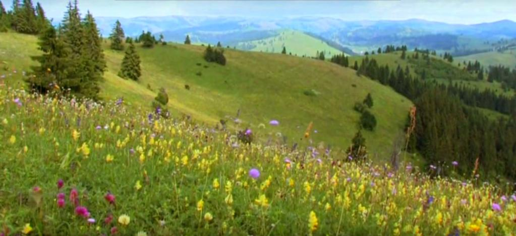 Meadows - Hotspots of Biodiversity and Traditional