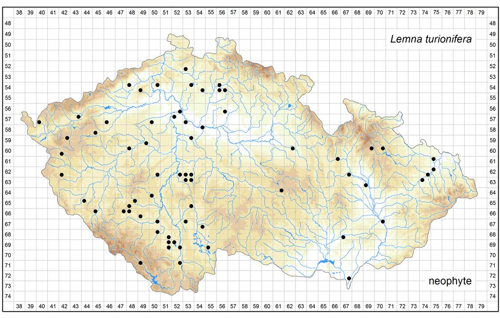 Distribution of Lemna turionifera in the Czech Republic Author of the map: Zdeněk Kaplan Map produced on: 07-11-2016 Database records used for producing the distribution map of Lemna turionifera