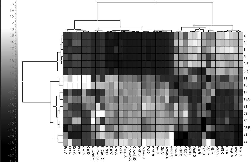 GenEx: Data Analysis Software 81 groups samples/genes based on correlated expression in reduced space. Fig. 4.