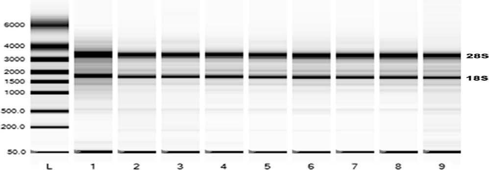R. Sindelka et al. / Methods 51 (2010) 87 91 89 Fig. 2. The quality of the extracted RNA was assessed with capillary electrophoresis (Experion, Bio-Rad).
