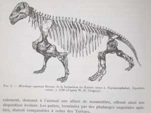 Tetraceratops lacks many derived characters present in other therapsids.