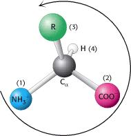 ? onformation: hanges do NT require breaking of covalent bonds - only rotation about a single