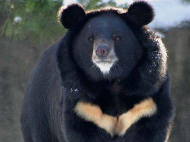 http://www.bearsoftheworld.